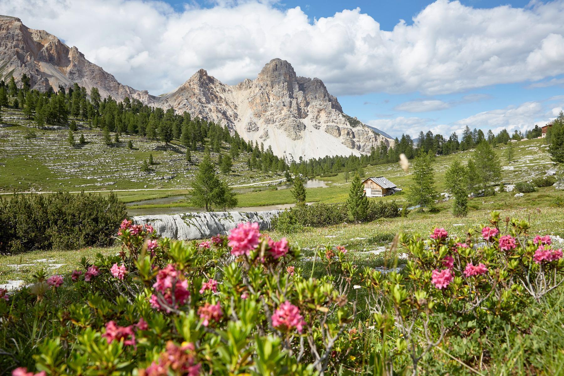 Gipfelwanderung mit Willi Wochenprogramm