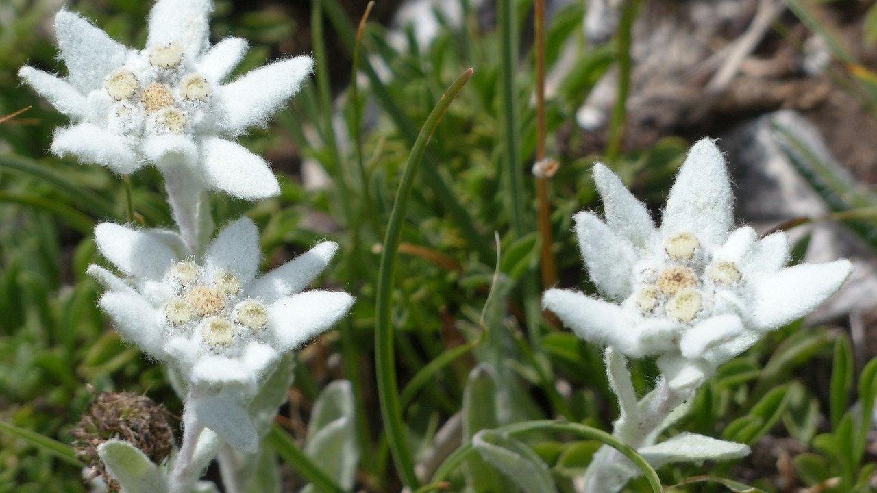 Event Wandertag: Artenreiche Alpenflora