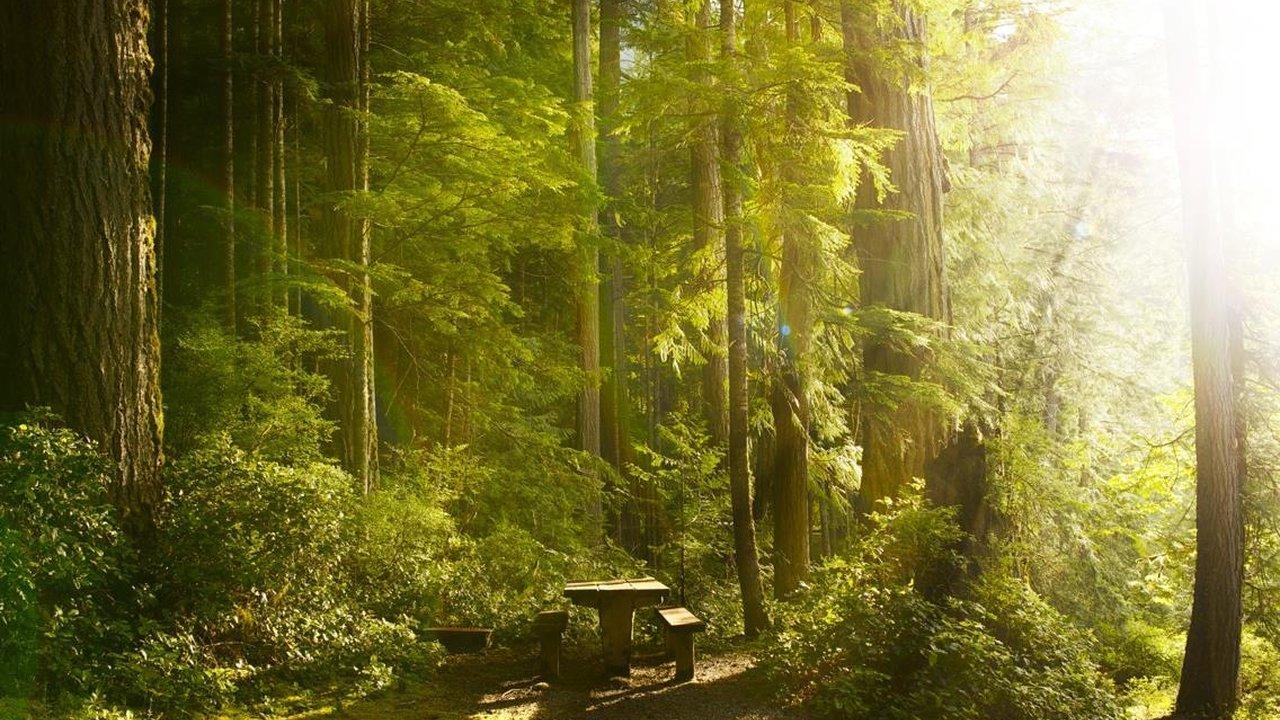 Event Südtirol Balance - Waldmeditation