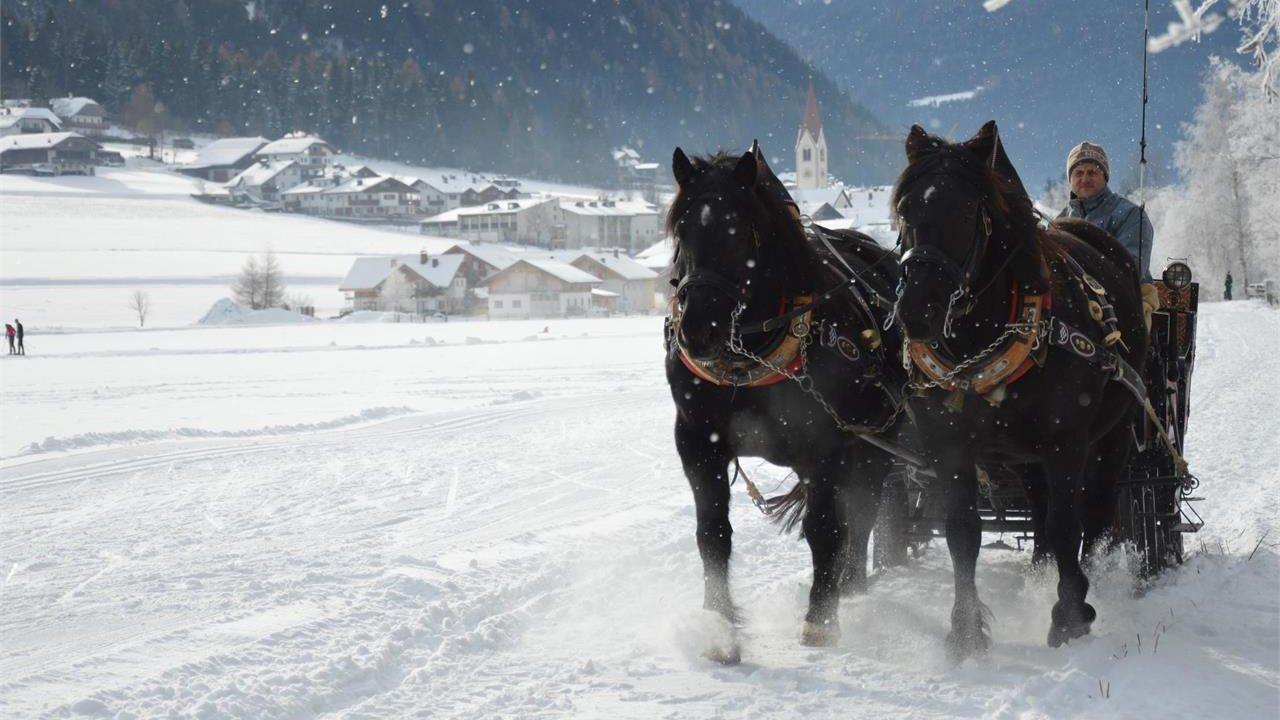 Event Pferdeschlittenfahrten in Oberrasen