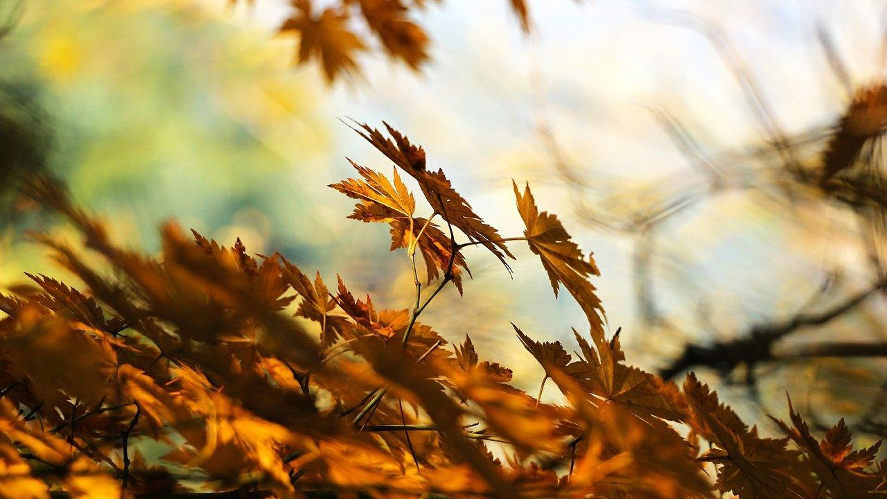 Event Naturalistic hike: autumn colours