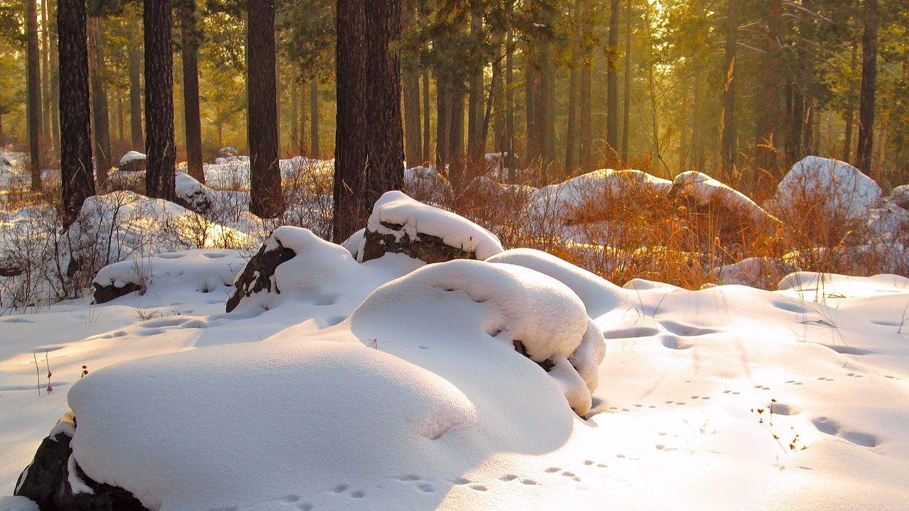 Event Winterwanderung