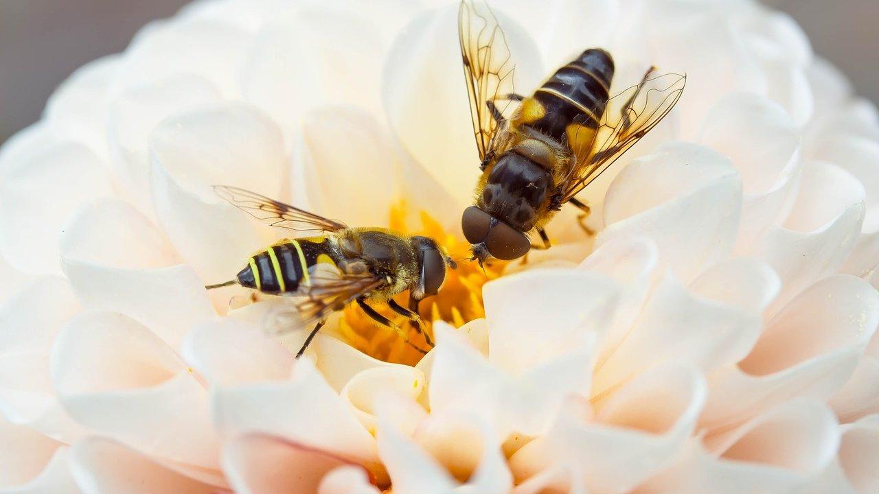 Event Wanderung: Einsicht ins Bienenvolk