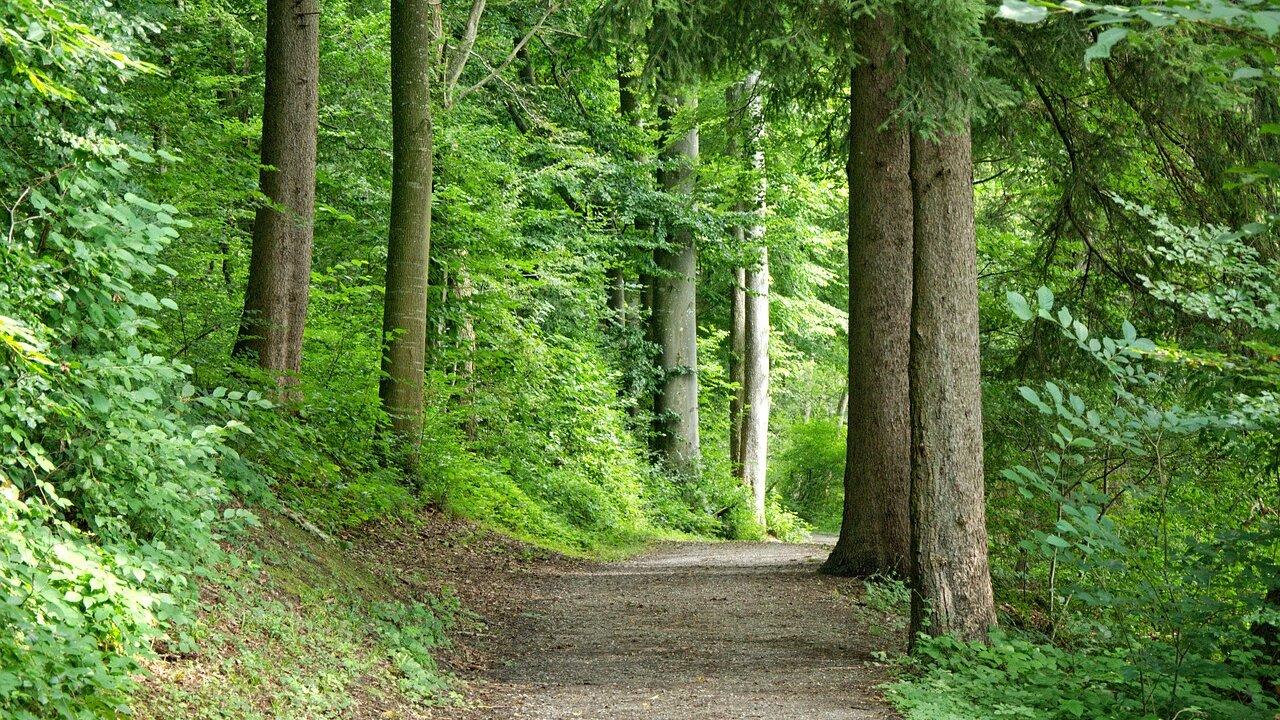 Event Nordic Walking & Kneippweg Annatal