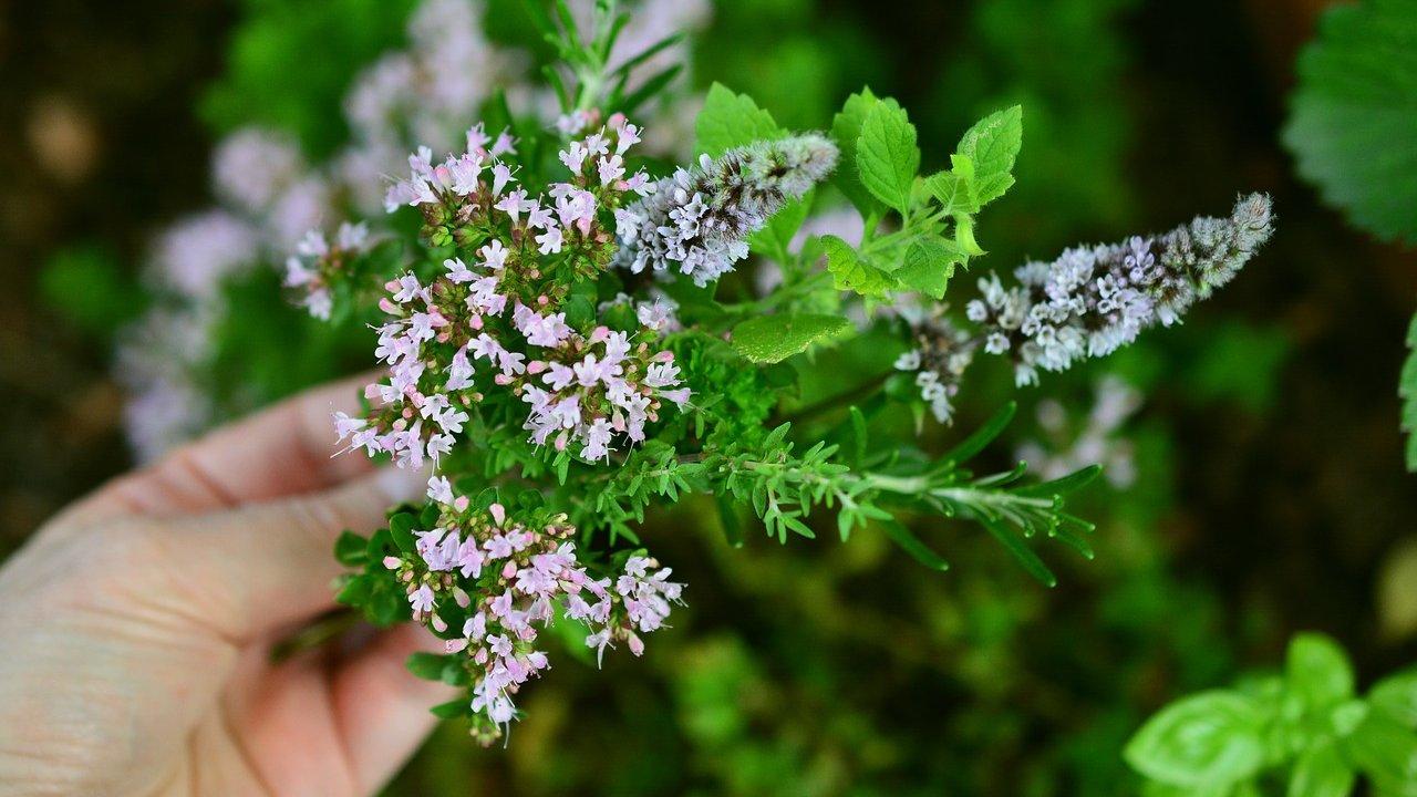 Event Südtriol Balance: herbal walk