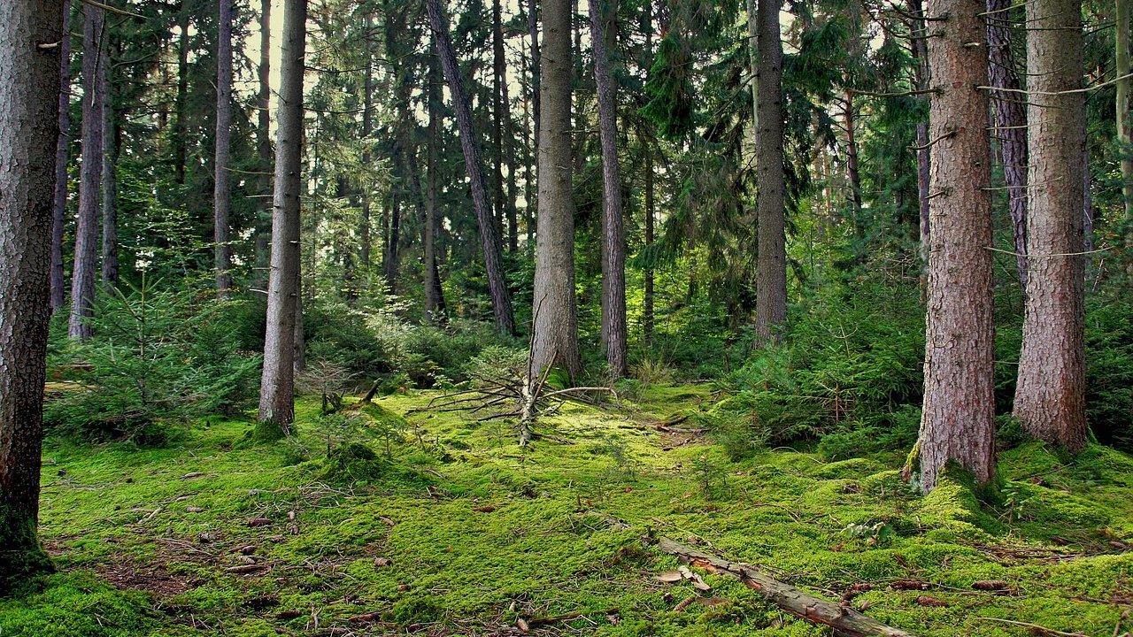 Event Südtiroler Kneippwoche: Waldbaden