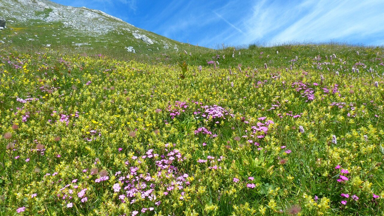 Event Die sanften Hügel der Bergwiesen