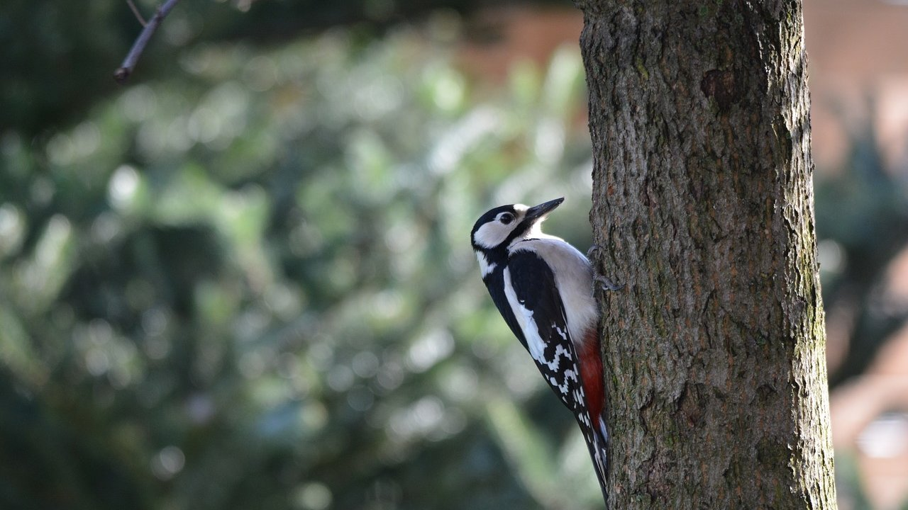 Event Birdwatching hike