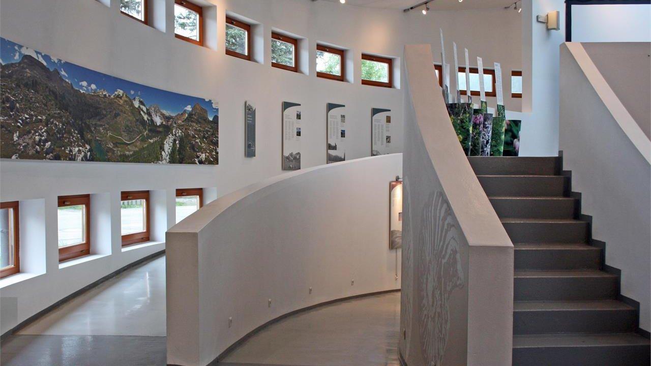 Event Führung - Steinadler in den Ostalpen