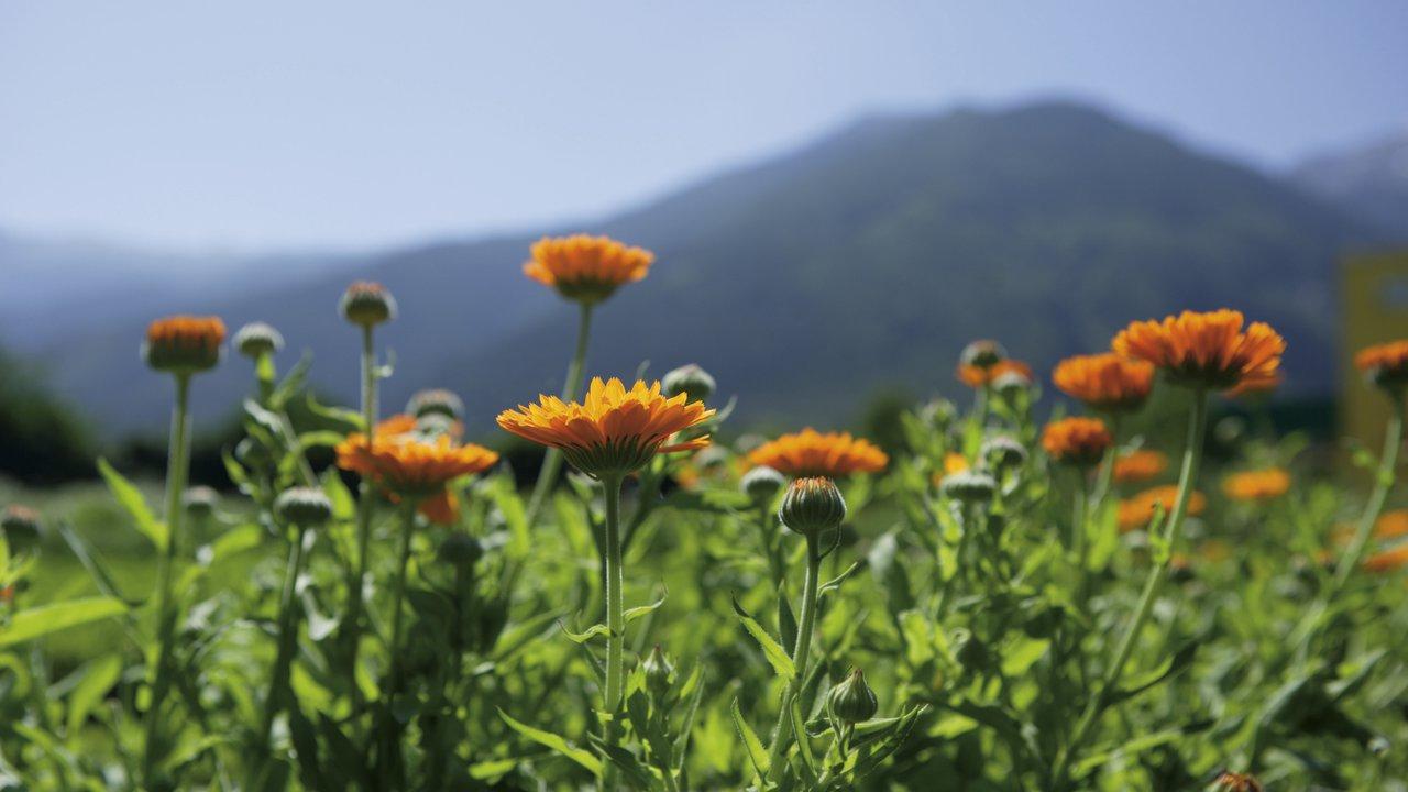 Event Risveglio della natura a primavera