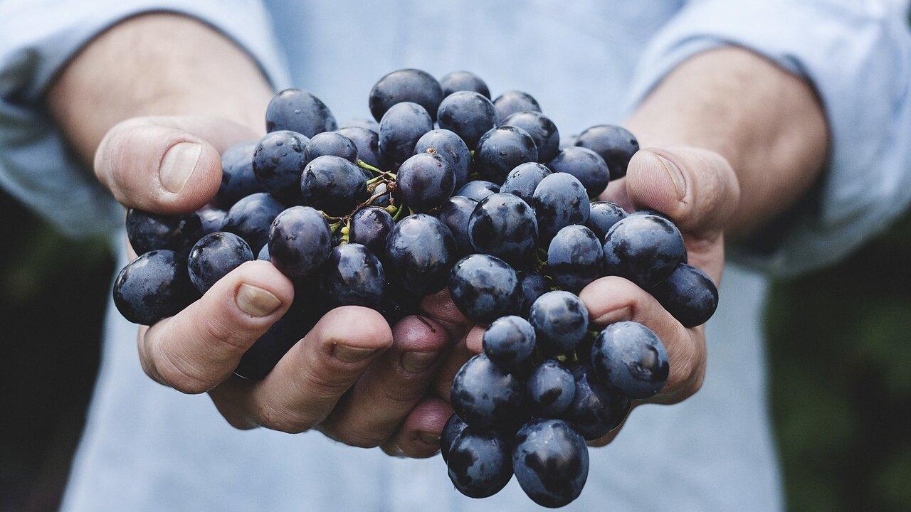 Event Vineyard visit and wine tasting