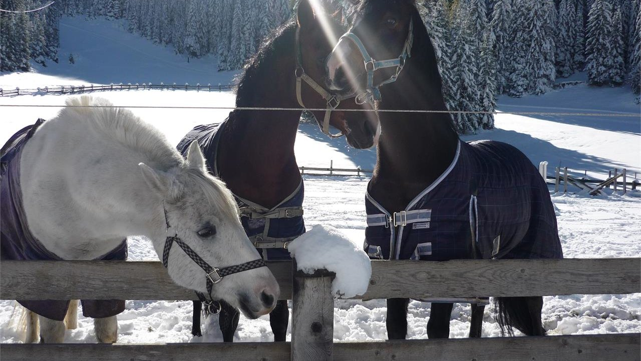 Event On snowshoes to the horse paradise