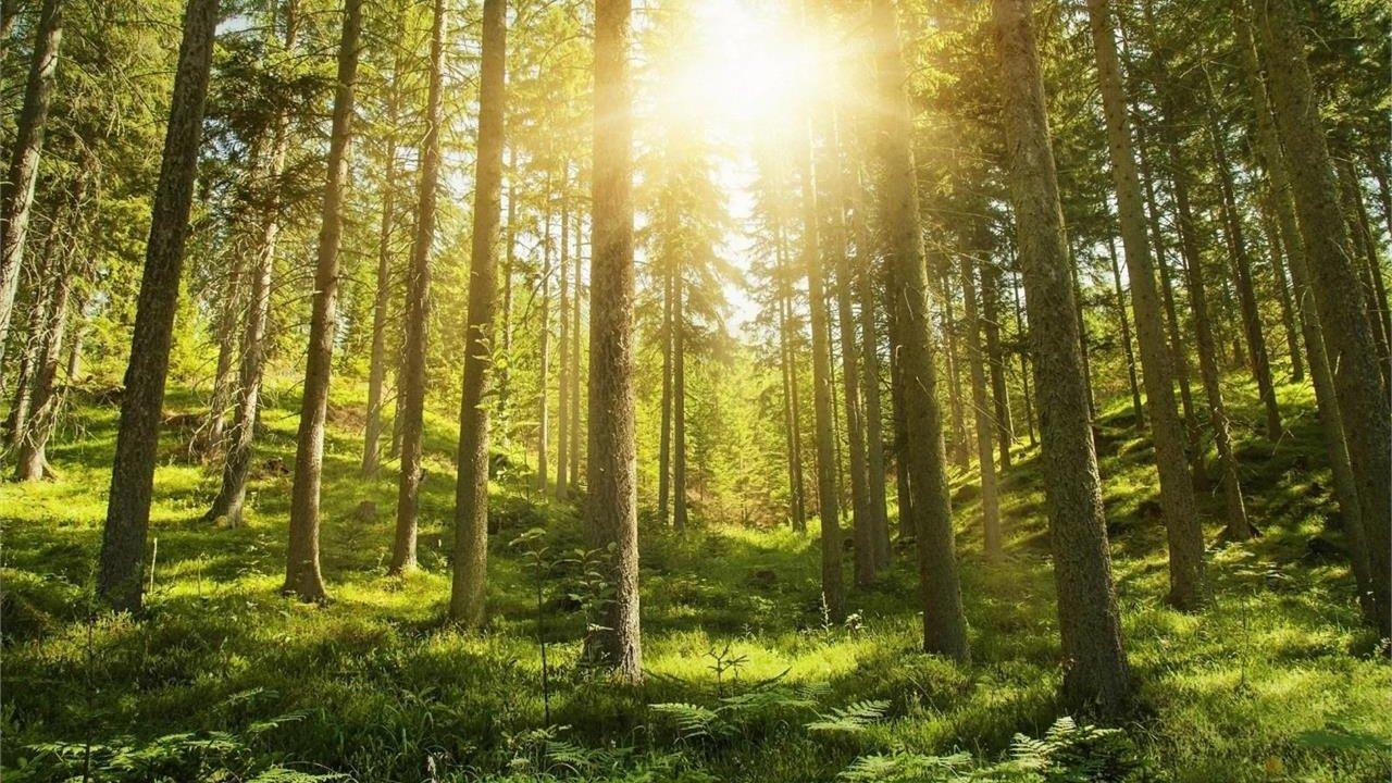 Event Südtirol Balance: Waldbaden