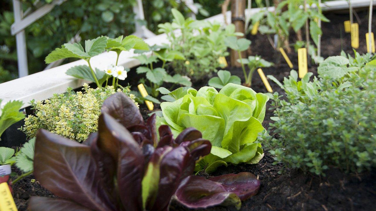 Event Probieramol-provaci: Gardening