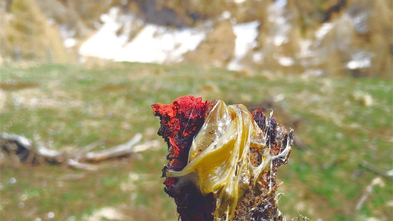 Event Südtirol Balance - Natur erleben