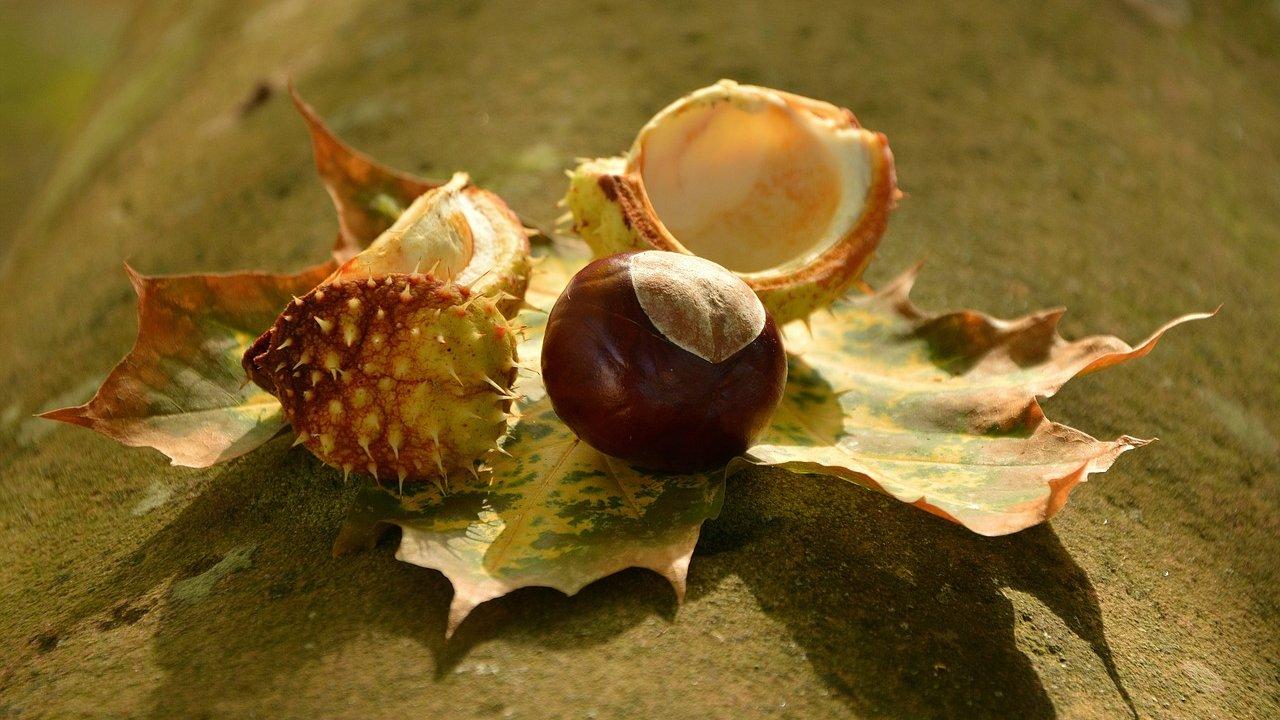 Event Herbstfest in Seis am Schlern