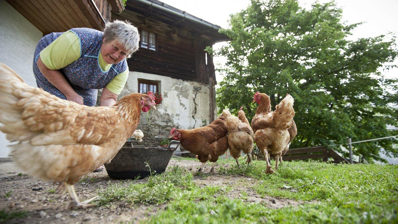 Event Ein Vormittag auf dem Bauernhof