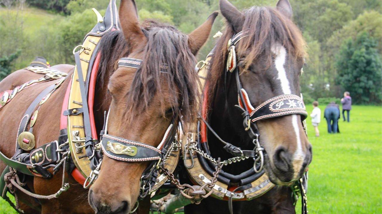 Event Famiglia: I cavalli al maso Sunranch