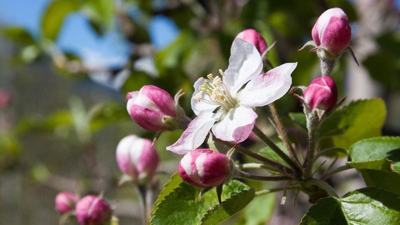 Event Geführte Frühlingswanderung