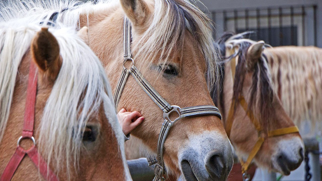 Event Pferdekutschenfahrt